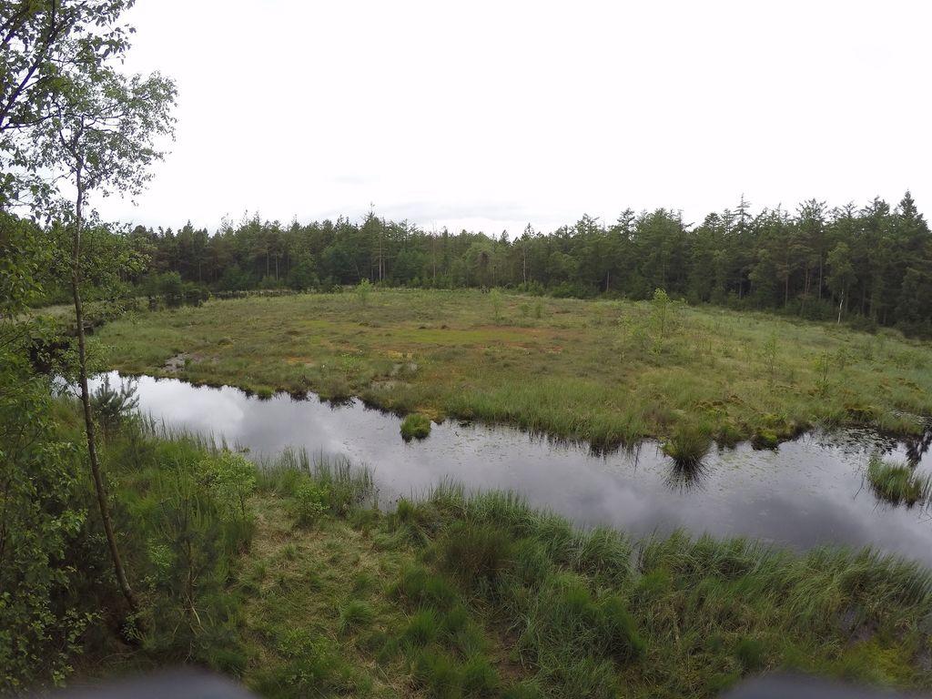 Wittmunder Wald
