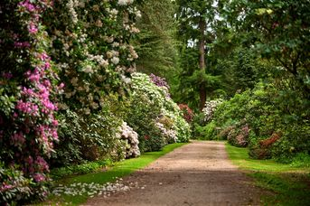 Rhododendronroute