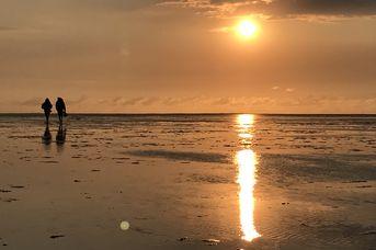 Fotosafari Wattenmeer