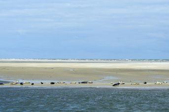 Seehund in Sicht